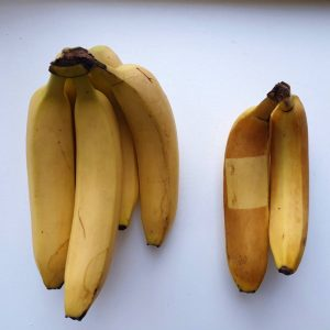 Bananentest UV-C straling